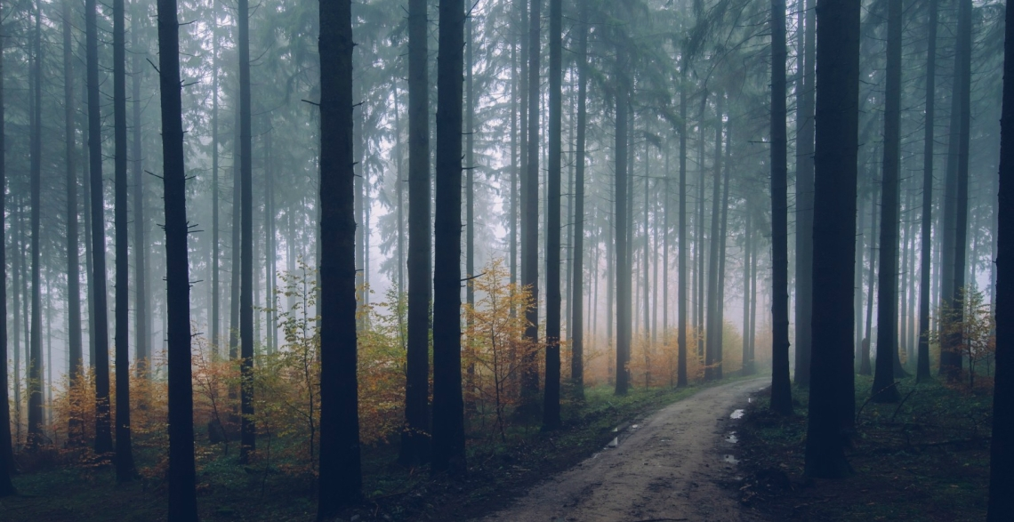 track-forest-path